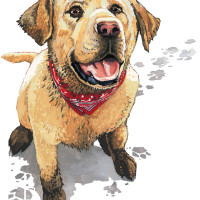 "Duluth Trading Company: ""Happy, Muddy Dog"""