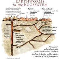 "From Earthworms of the Great Lakes: ""Earthworms in the Ecosystem"" Diagram"