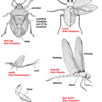 "From Insects of the Northwoods: ""Insect Parts"""