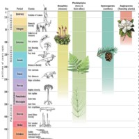 Fern Evolution